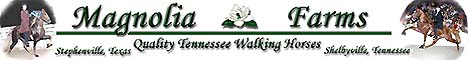 Magnolia Farms in Texas and Tennessee for top quality Tennessee Walking Horses.